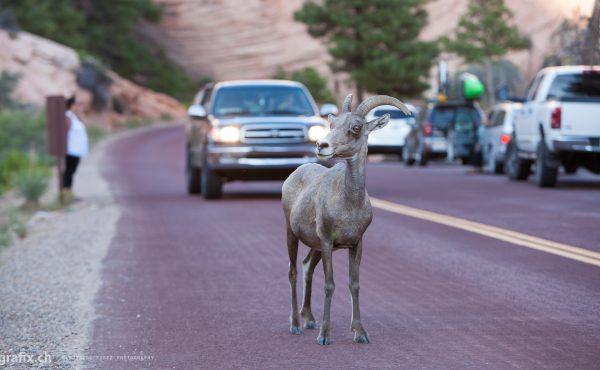 Utah State Route 9